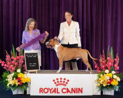 Dog Of The Year Support Show | Ms P. Taylor (Canada) | Australian Bred In Group | 20.10.19